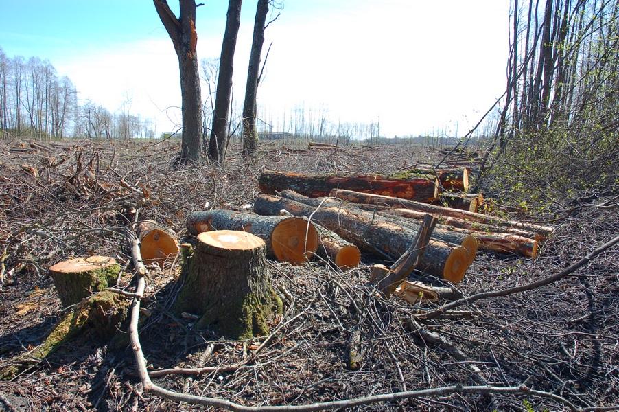 Maardu Hiiemets, 29.04.10224 (2011) OÜ Eremka raiutud hiis
