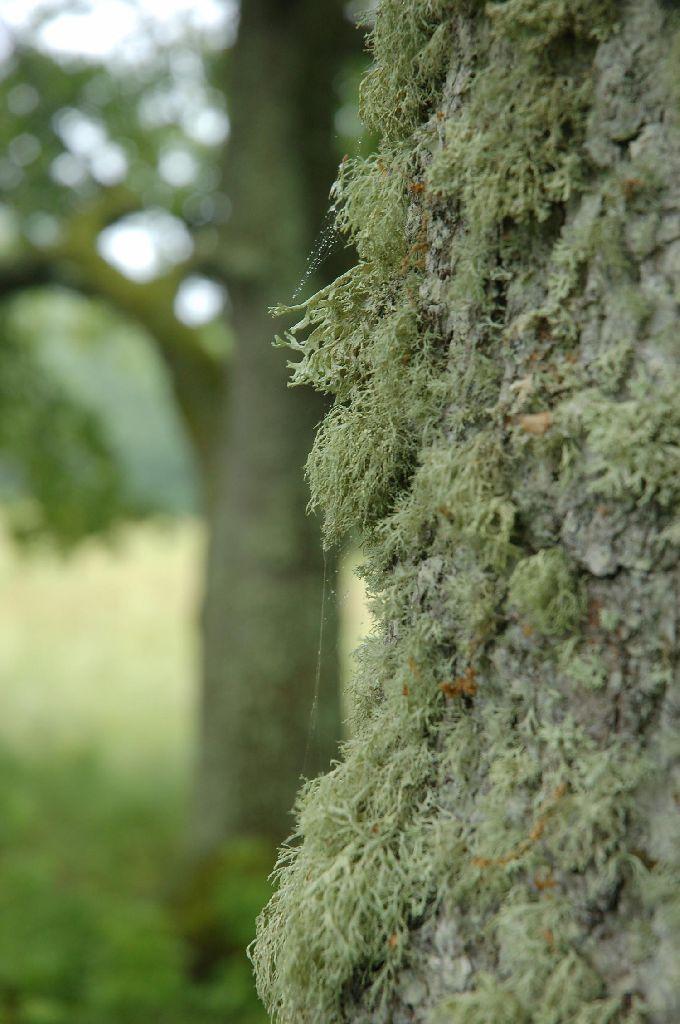 hiies elavad puud ja teised olesed