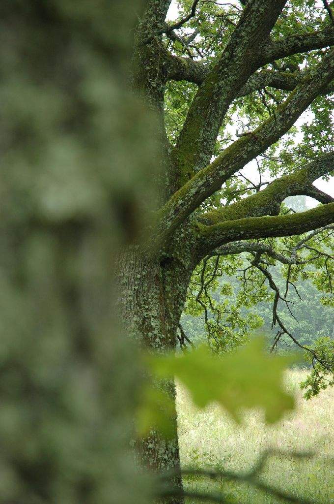 puud on elus