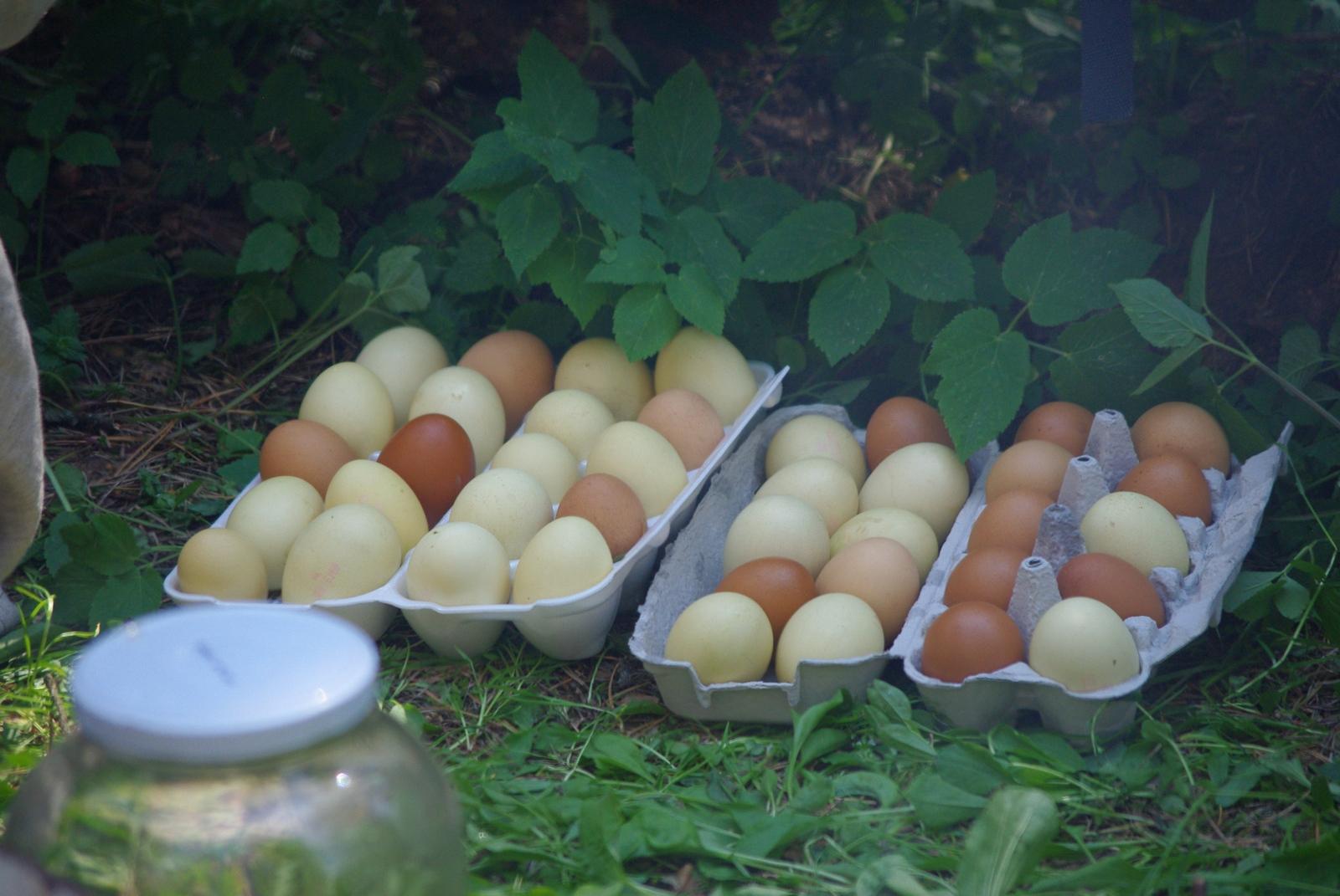 Värsked kaselehed annavad suvistemunadele õrnroheka värvi