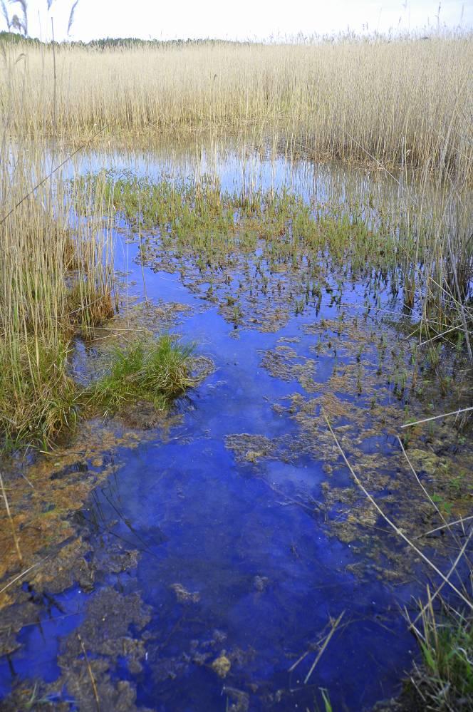 Vesine allikas (Raviallikas II)