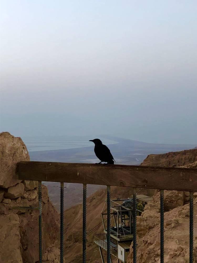 гора Масада
