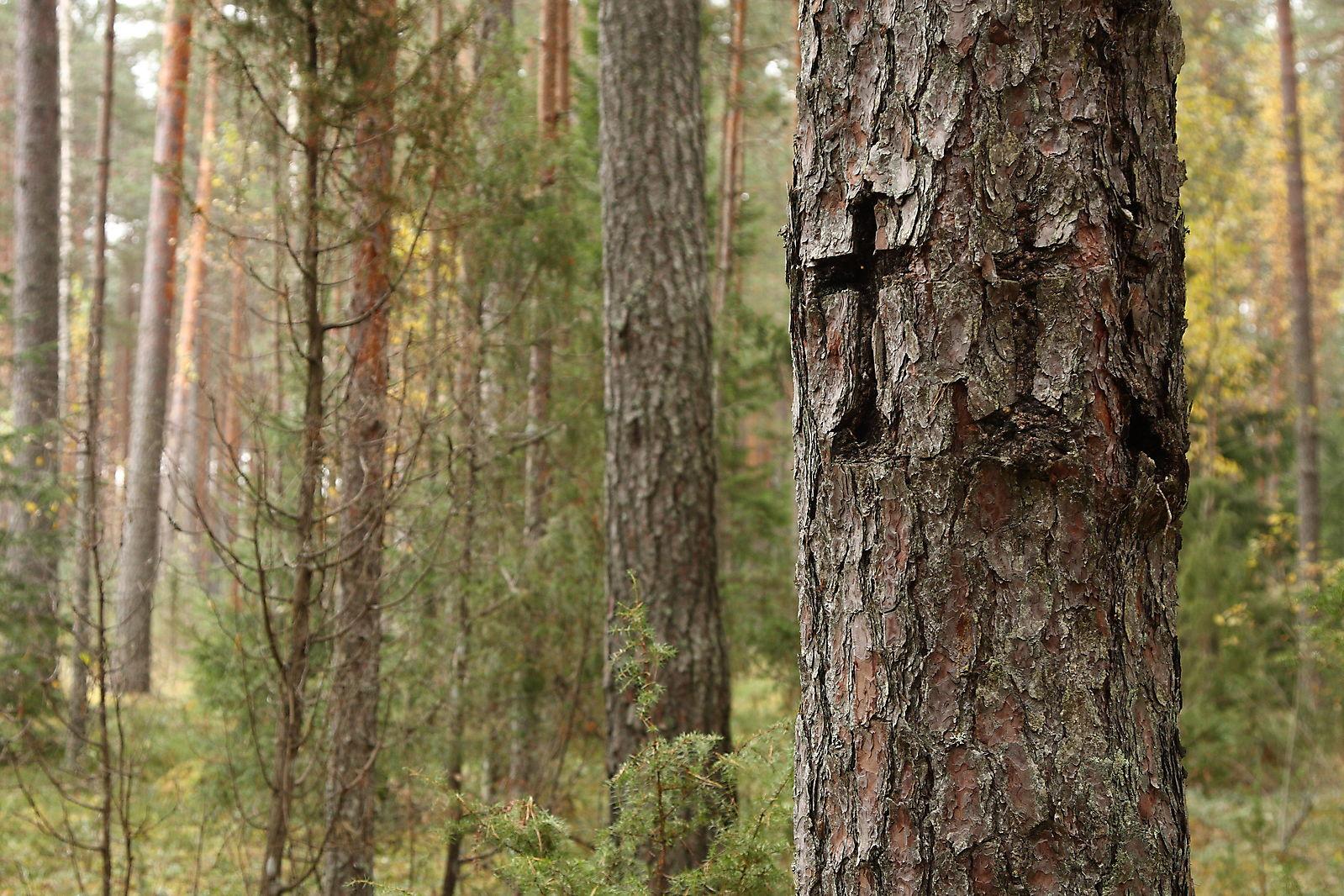 Ristipuud  Kagu-Eestis