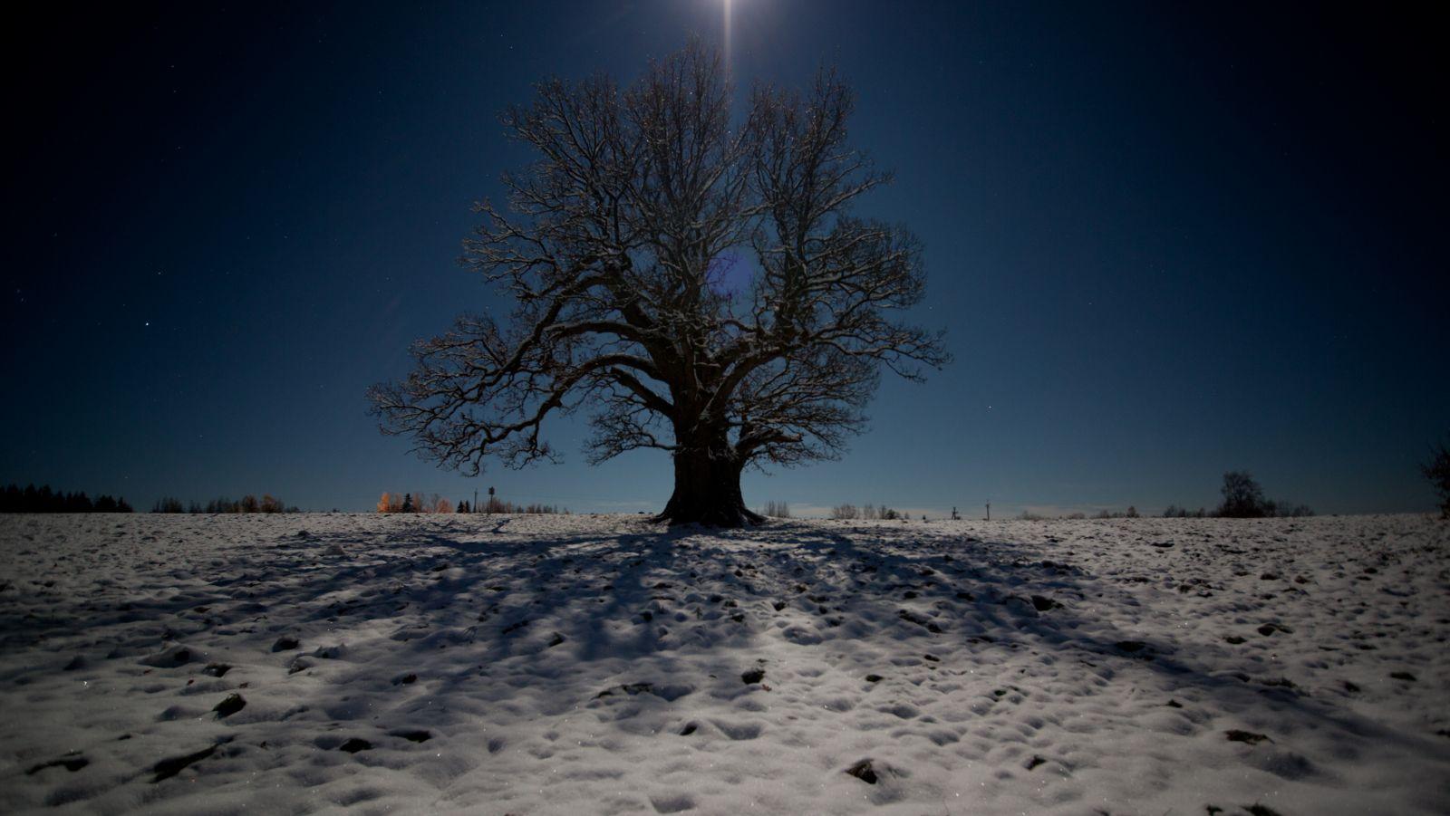 Mida suurem puu, seda suurem vari