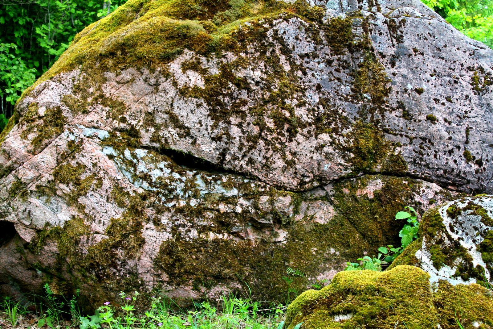 Naerev kivi
