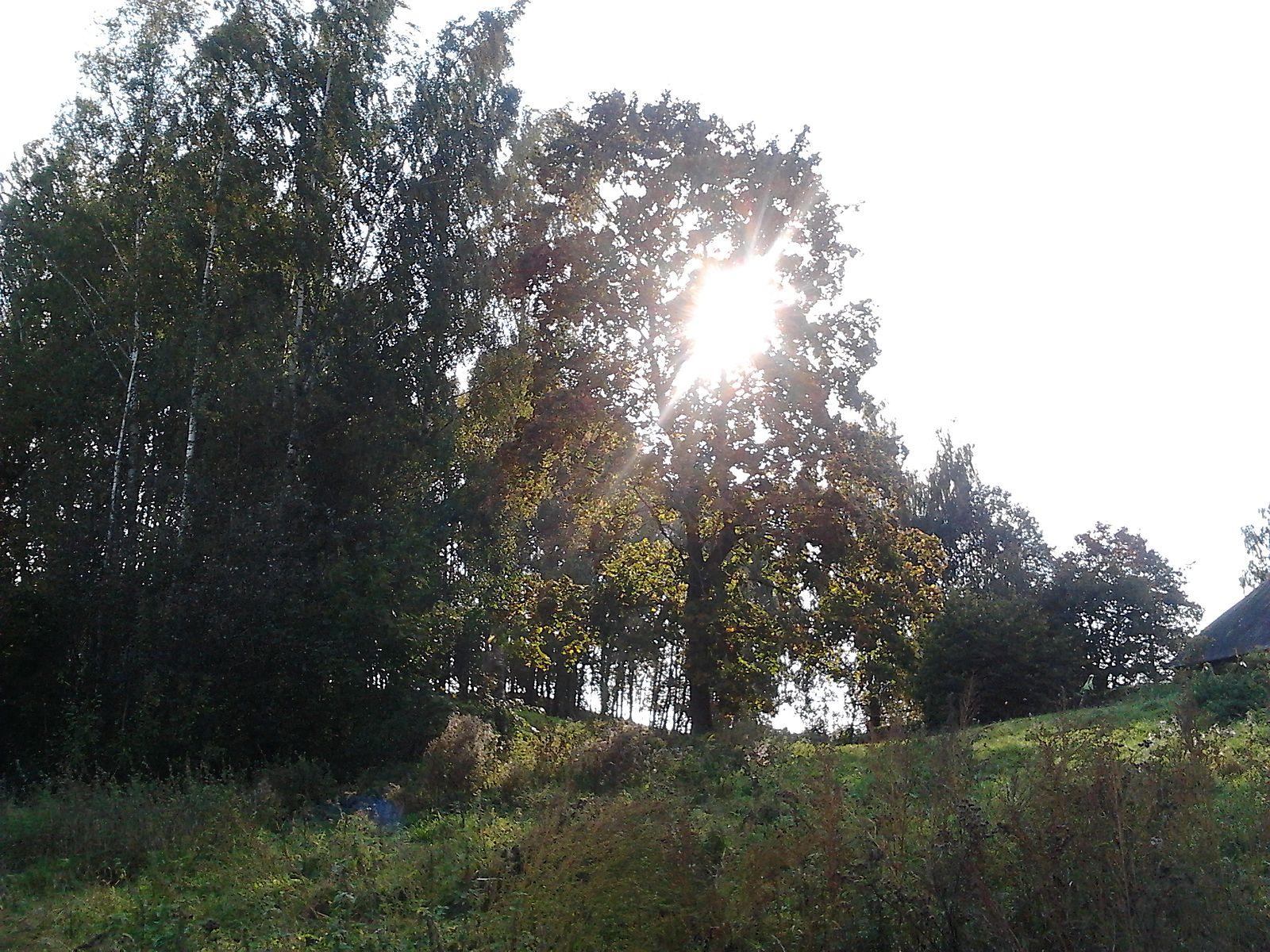 Annemägi