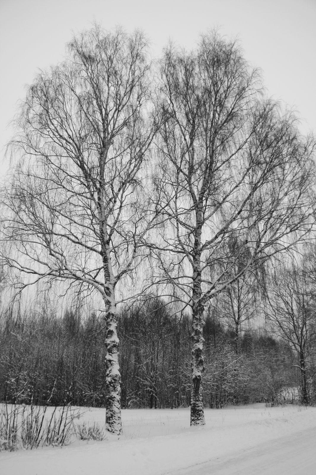 Talvised ristikased
