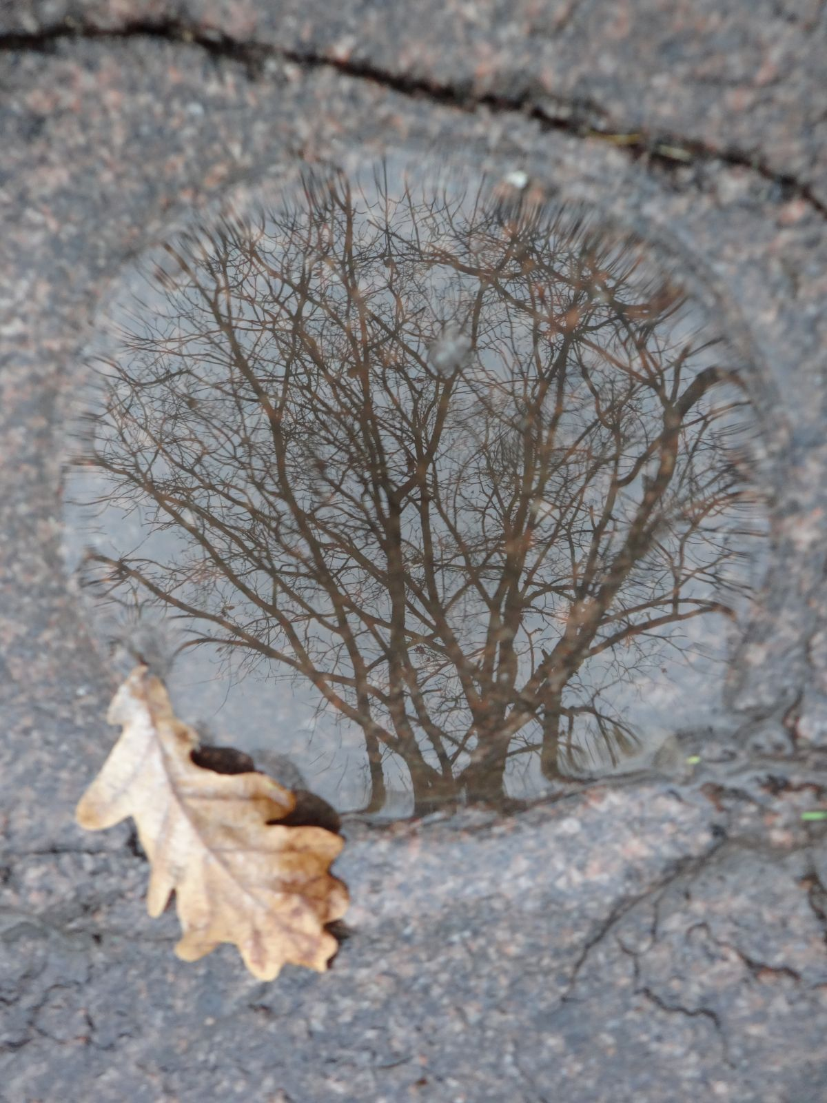 Жертвенный камень эстонцев