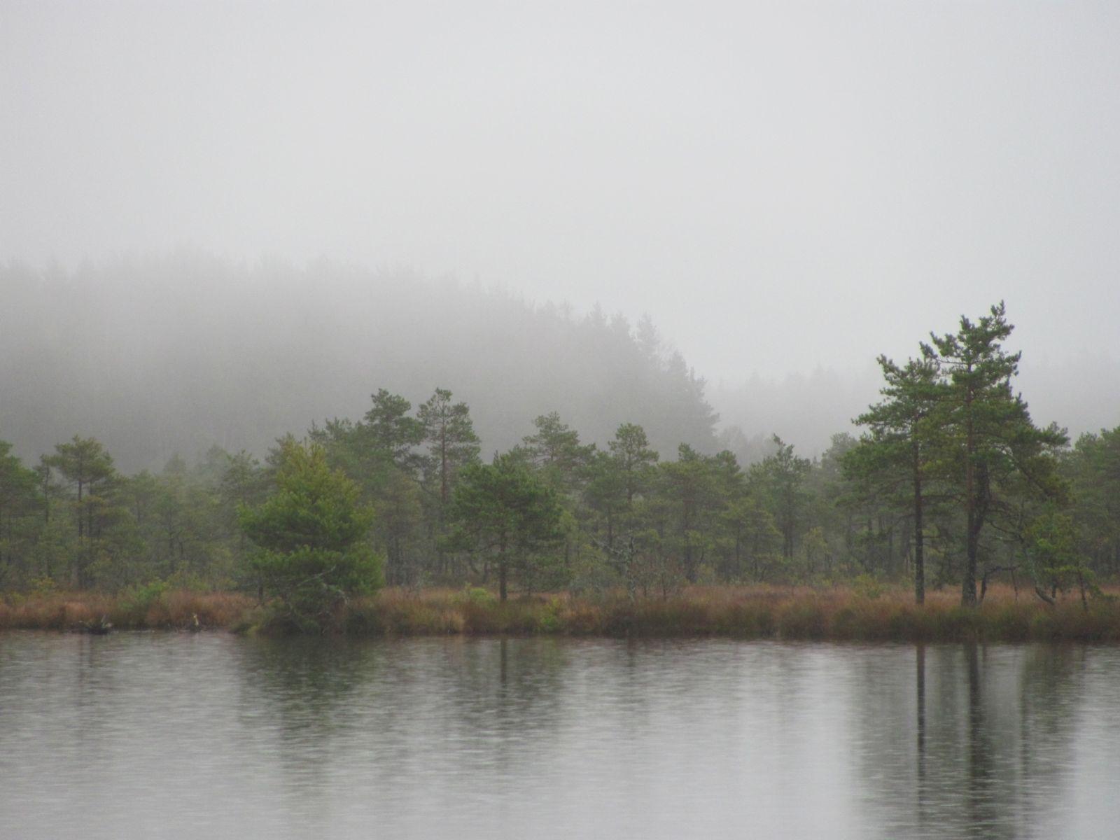 Hiiesaar vihmas