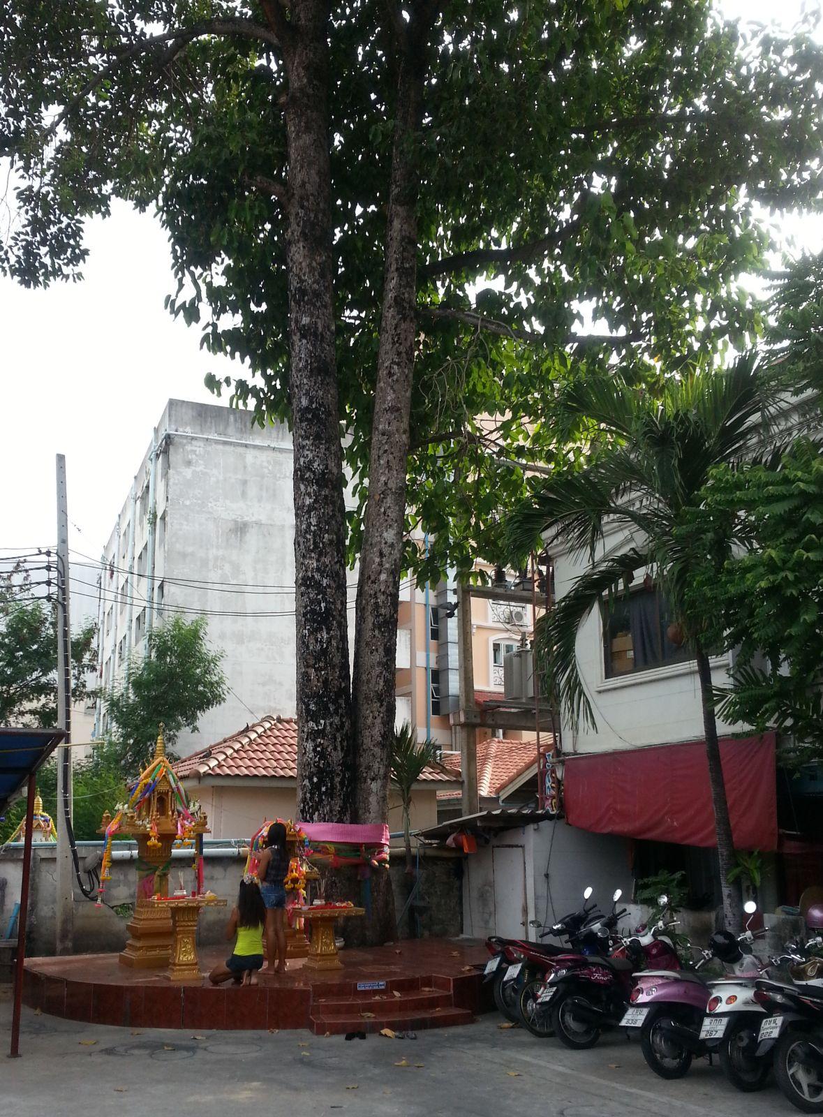 Puude austamine linnas