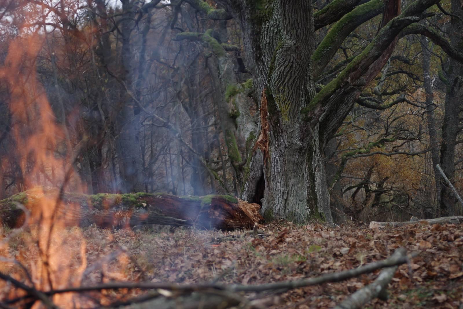 Suitsuvõra ja tammevõra kohtumine