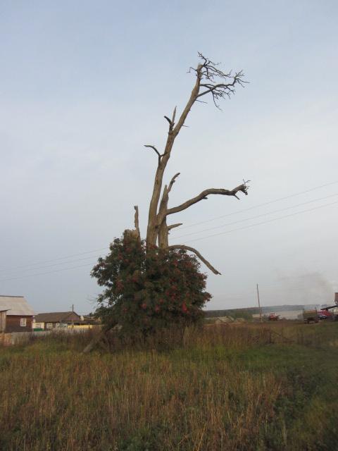 Истоки деревни Нурдуваш (Азиково)