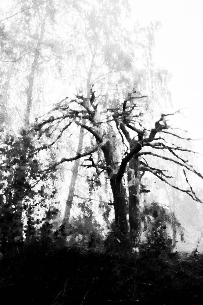 Sacrificial tree of Muurla