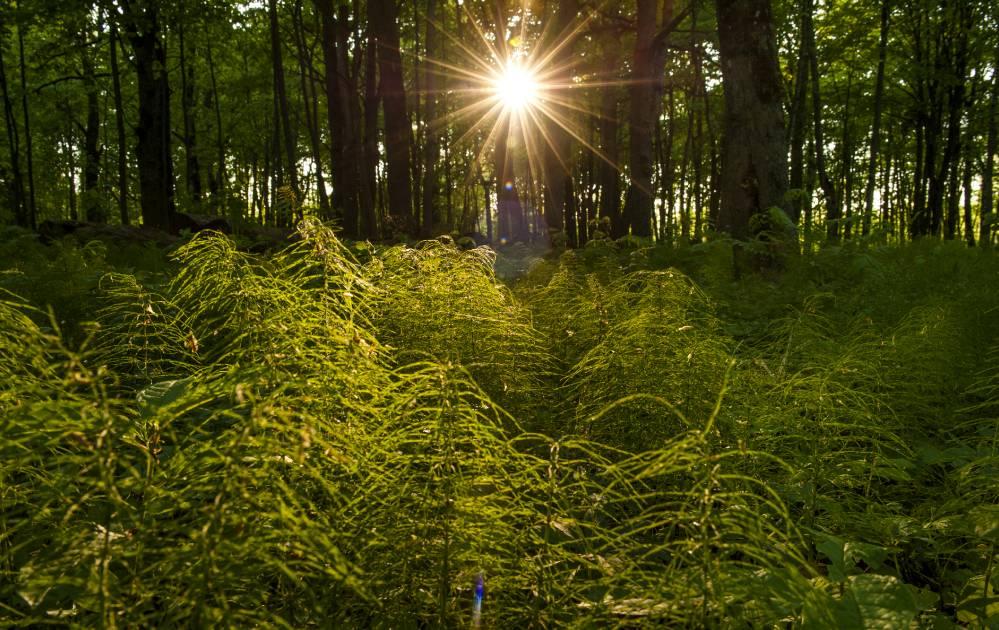 Väike ja suur mets