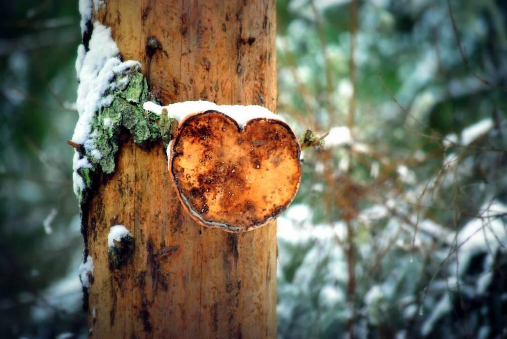 Südamest südamesse