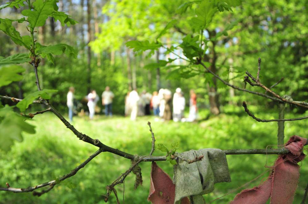 Hiiepalvus tamme vaatevinklist