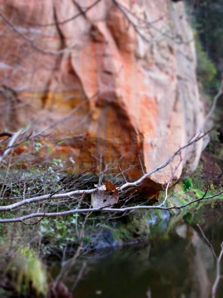 Kaks vägevat: puuleht ja püha koobas