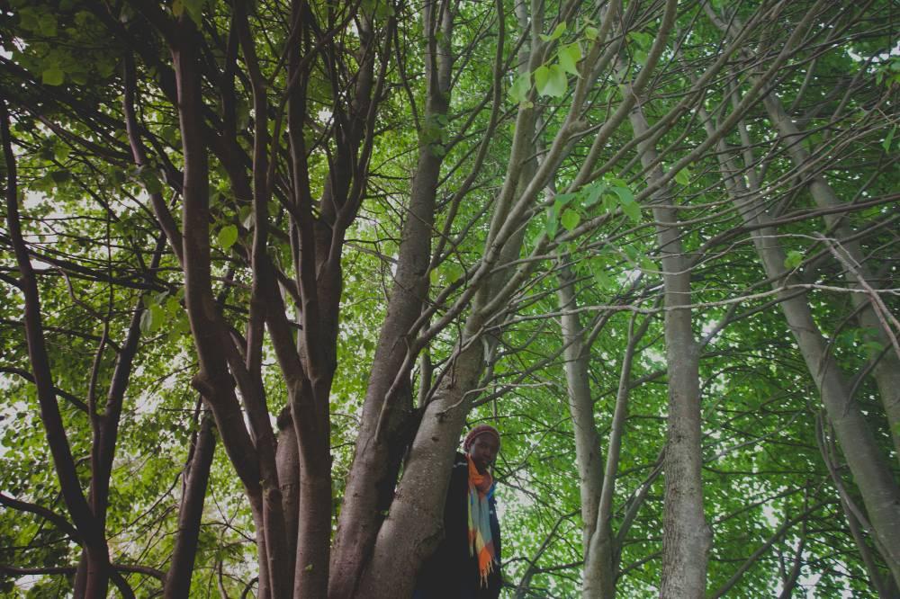 Puu kütkes