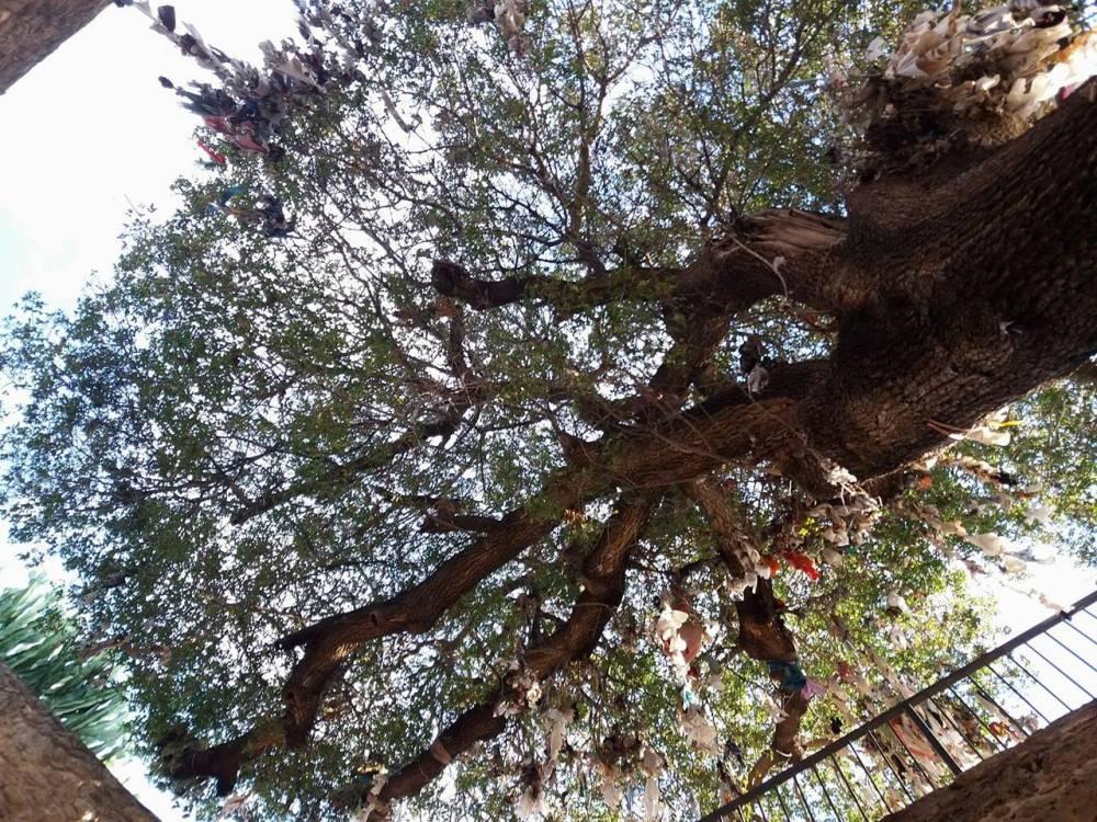 Muinas andide ja soovide puu