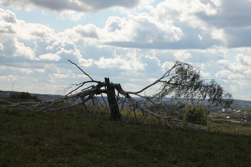 Священное дерево