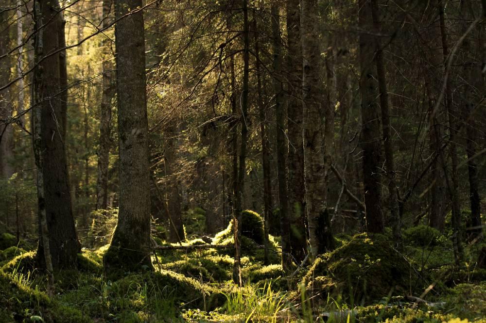 Võluallikat kaitsev mets