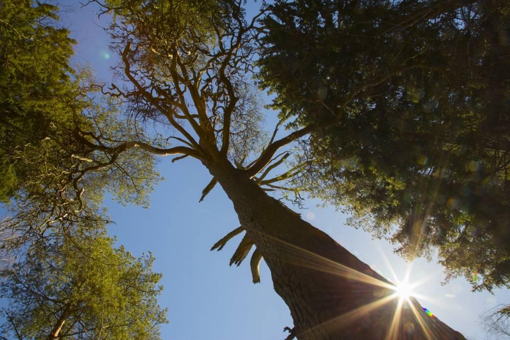 Puha puu