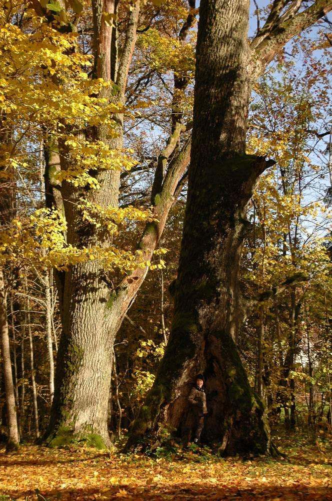 Valgjärve hiie puud