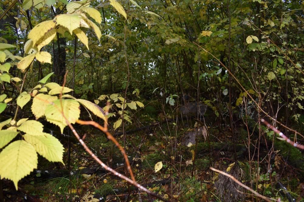 Ohvrikoht Kabelimägi oma nõiutud loodusega