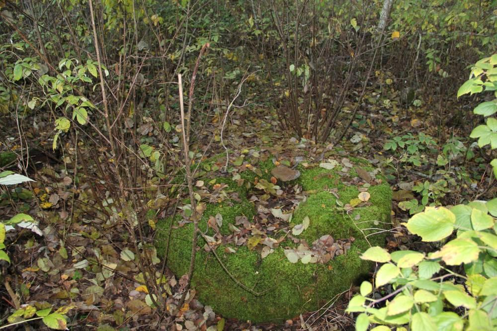 Rohelises samblarüüs 1