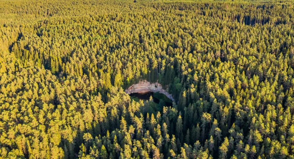 Müstika keset metsa