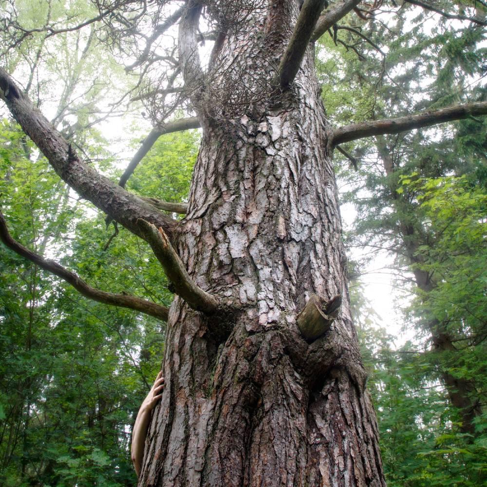 Laurinmäen uhrilehto   Laurinmäki sacrificial grove