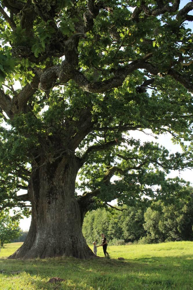 Puu väest osasaamine